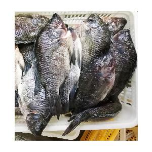 Best Seller Frozen Gutted Scaled Tilapia Whole Fish 550-750g