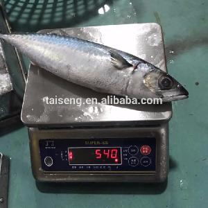 Mackerel Ice Fish 15kg 400-600(20-30pcs)