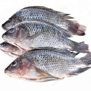 Frozen Farming Black Gutted   Scaled Whole Tilapia Fish For sale