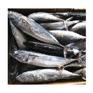 Sea Frozen Bonito Fish Tuna with all size