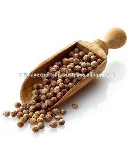 Best Quality of Coriander Seeds