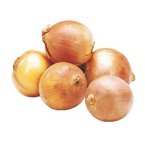 wholesale most favourable big onion yellow  onions   market   onions   prices