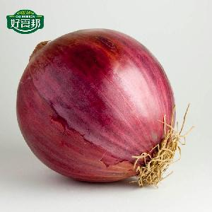Small Onion Healthy Food Fresh Market Onions Prices