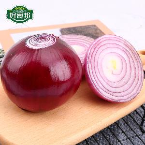 Hot selling red onion fresh wholesale with market price