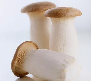 2020 Fresh Growing 2kgs per vacuum packed oyster mushrooms all year round supplied