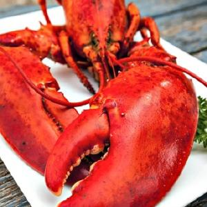 Live Canadian  Lobster s | Frozen  Lobster   Tail s | Lobster   Meat