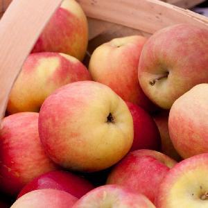 fresh red Fuji apple fruit