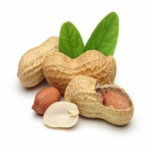 High quality Organic healthy peanut powder without skin removal