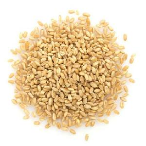 HACCP Certification Durum Wheat for Sale