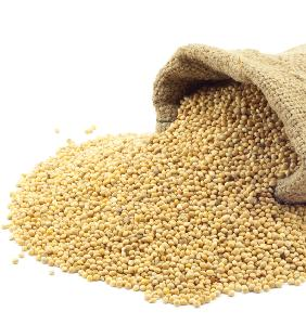 Wholesale Supplier of Top Grade in husk / foxtail millet price