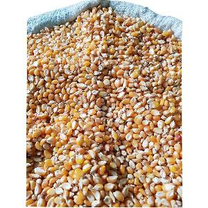 Dry yellow corn maize for animal feed