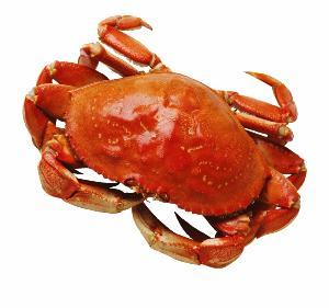 Fresh Live Crab/Live Mud Crab/Live Seafood!