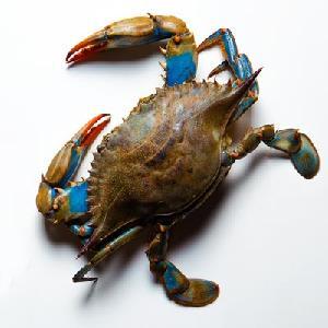 Frozen Live Fresh Mud Crab (Male Female)