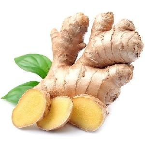 Competitive price fresh fat ginger with super quality