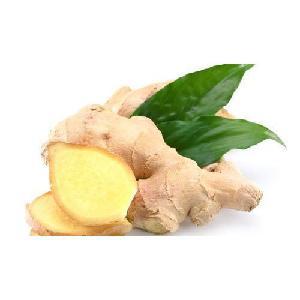 New crop fresh ginger supplier,100g/150g/200g/250g/300g