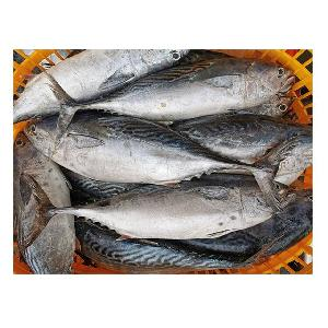 China supplier types of seafood frozen bonito fish for sale