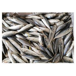fish product type and frozen style frozen seafood mix king fish pacific mackerel