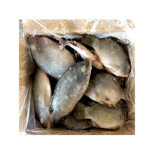 quality sea fish best seafood with fresh frozen tilapia fish