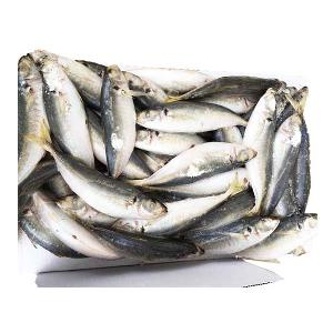 Seafoods And Frozen Food Round Scad Fish with 120pcs for Philippines