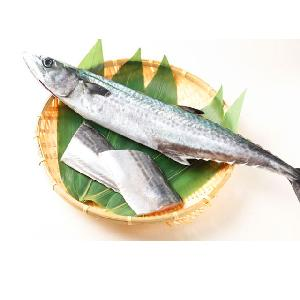 High Quality Hot Sale Spanish Mackerel Fish