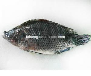 Frozen Black Tilapia Fish Farm For Sale