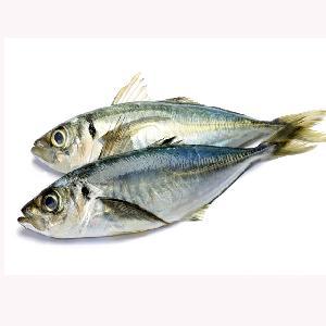 High Quality Seafood frozen horse mackerel blocks fish
