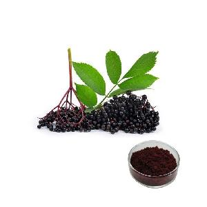 free sample anthocyanins fruit juice powder pigment black elderberry powder