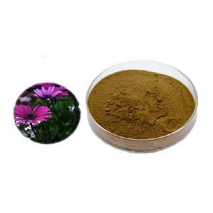 wholesale herb anti-cold anti-immunity echinacea purpurea extract powder