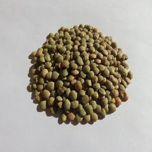 Green  Lentils /Organic Green  Lentils  Ready For  Export