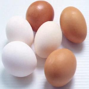 Fresh White and Brown Chicken Eggs For Sale