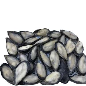 Frozen mussels meat with half shell