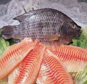 New Season African market Frozen Tilapia Whole Round Tilapia Fish