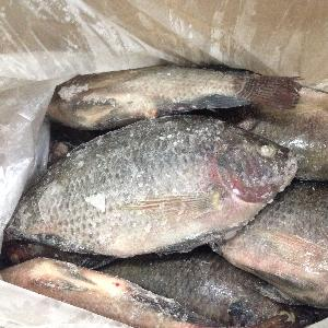 Hotsale Good Price Frozen Tilapia Whole Round Tilapia Fish