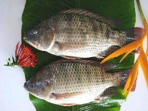 Good Price Frozen Tilapia Whole Round Tilapia Fish