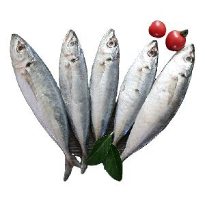 China Sea Food Frozen Round Scad Fish Small Eye Scad