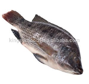 Frozen Tilapia Whole Round  Fresh Fish