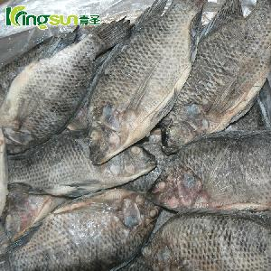frozen gs tilapia gutted and scaled
