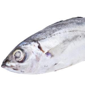 2018 Good Price Frozen Horse Mackerel Fish For Market