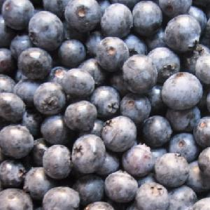 Top Quality Frozen Blueberry IQF Wholesale Blueberries New Crop with Lowest price