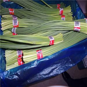 Hot Selling Fresh Garlic Sprouts with Lowest Price
