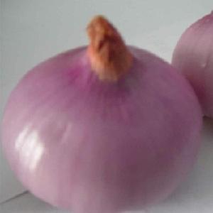 Premium Grade New Crop Mesh 100% Natural Fresh Red Onion/onions