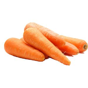 New crop fresh carrot vegetable specification