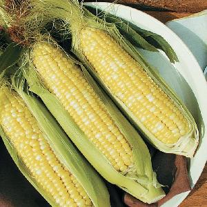 canned  white   corn