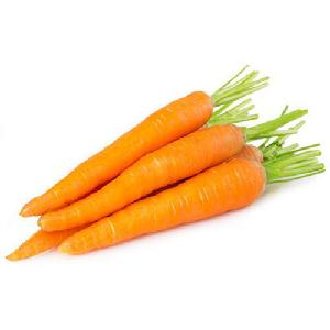 Lowest Price 2019 New Crop Fresh Carrot