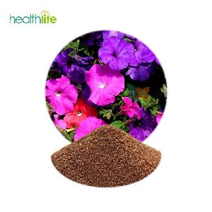 Free Shipping Hybrid Flower Seeds Petunia Seeds for Sale
