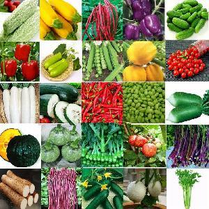 Various Vegetables Seeds Hybrid Vegetables Seeds for Plantings
