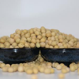 High protein rich yellow soy soybean soya bean from top rated distributor