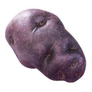 High quality purple  sweet   potato   pigment  powder