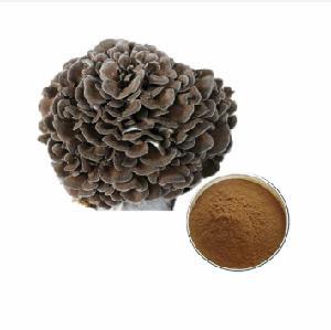 high qaulity dried Maitake extract powder