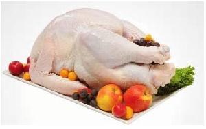 Вся цыплят-бройлеров